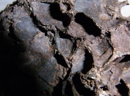 Dicuspiditermes nest interior