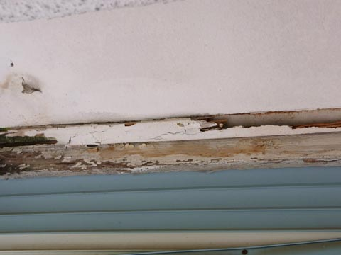 (Above) Termite damage within a roof panel. This roof will probably come crashing down one day.