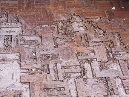 Termite damage on parquet flooring