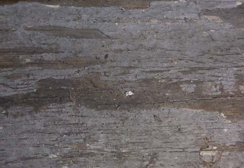 Termite damaged wood exterior