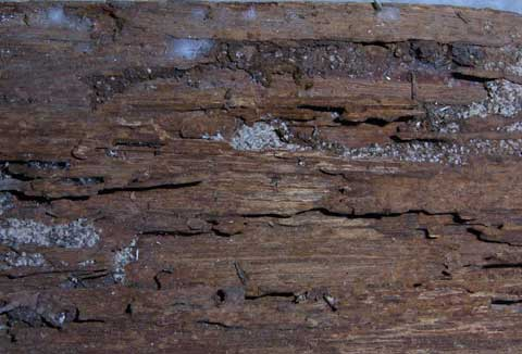 Termite damaged wood interior