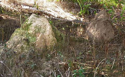 Termite mounds side by side
