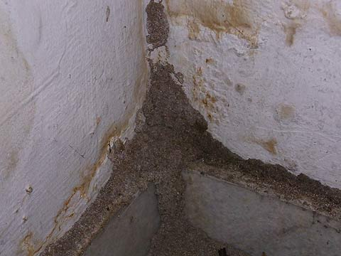 Base of termite mud tube