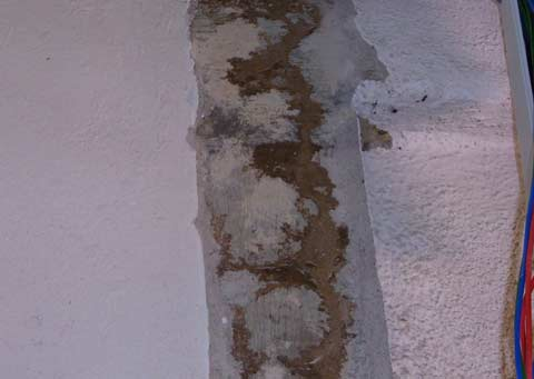 Termite mud tubes in concrete