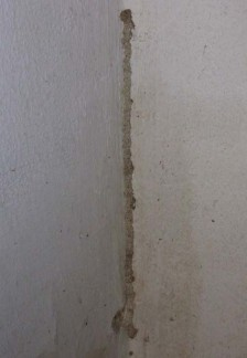 Termite tube on wall