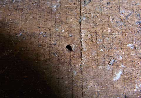 Signs Of Drywood Termites Termite Web