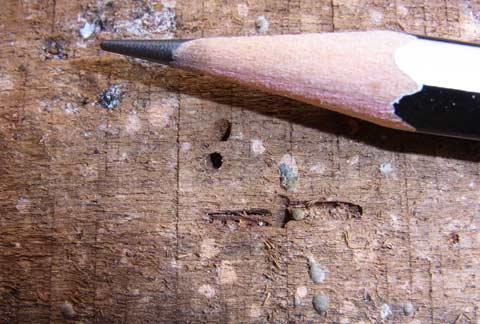 Drywood termite kickhole