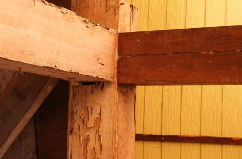 Drywood termite damage picture